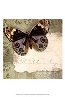 Butterfly Notes IV Framed Print
