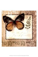Butterfly Notes V Framed Print