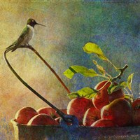 Apples & Hummer Fine Art Print
