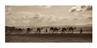 Egyptian Camel Transport Fine Art Print