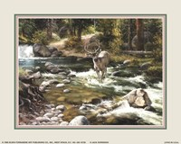 Buck in Midstream Fine Art Print