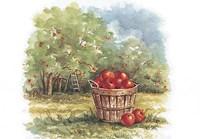 Field of Apples Fine Art Print