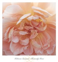 Heavenly Rose Fine Art Print
