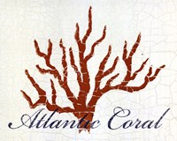 "Atlantic Coral by Hakimipour - Ritter - 10"" x 8"""