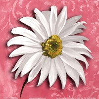"""Blooming Daisy III by Nelly Arenas - 6"""" x 6"""""""