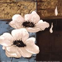 "White Poppies I by Patricia Pinto - 6"" x 6"""