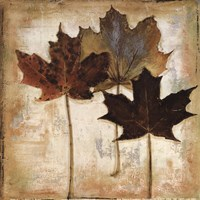 Natural Leaves III Fine Art Print