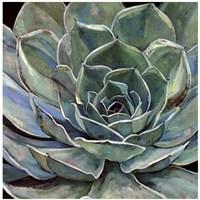 Agave Flower Fine Art Print