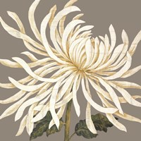 Glorious Whites I by Judy Shelby - various sizes, FulcrumGallery.com brand
