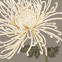 Glorious Whites II by Judy Shelby - various sizes, FulcrumGallery.com brand