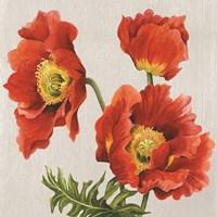 Poppies on Silk Fine Art Print
