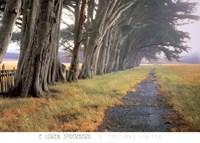 Eucalyptus Fog Fine Art Print