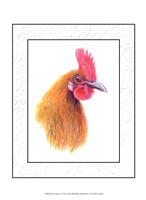 Rooster Insets I Fine Art Print