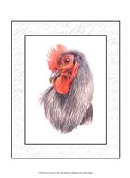 Rooster Insets IV Fine Art Print