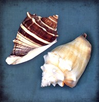 Two Shells III Fine Art Print