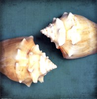 Two Shell I Fine Art Print