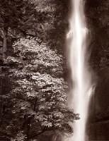 """Multnomah Falls by Alan Majchrowicz - 22"""" x 28"""""""