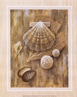 Assorted Shells Fine Art Print