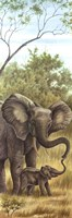 Mama Elephant with Baby Fine Art Print