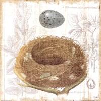 Botanical Nest III Fine Art Print