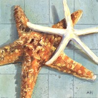 Starfish I Fine Art Print