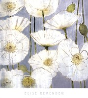 White Poppies Fine Art Print