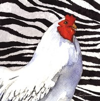 Zebra Rooster Fine Art Print