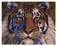 "Tiger by Robert Tate - 21"" x 17"""