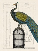 Peacock Birdcage II Fine Art Print