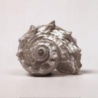 "Beachside Treasure III by Assaf Frank - 12"" x 12"""