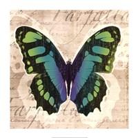 "Butterflies II by Tandi Venter - 28"" x 28"""