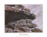 Snow Leopards Fine Art Print