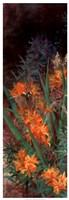 Wild Lily Garden I Framed Print