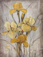 Golden Irises I by Timothy O'Toole - various sizes