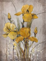 Golden Irises II by Timothy O'Toole - various sizes