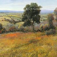Field In Summer Fine Art Print