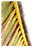 """Frond Study I by Emily Robinson - 17"""" x 21"""""""