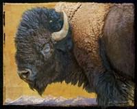 Bison Portrait III Fine Art Print