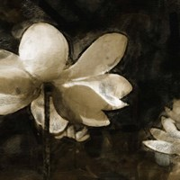 Bronze Lily II by Noah Bay - various sizes
