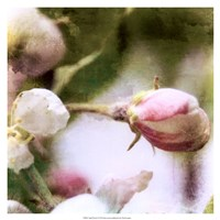 "Apple Blossom by Open Journey - 19"" x 19"""