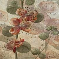 Desert Botanicals I Fine Art Print