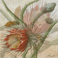 Desert Botanicals II Fine Art Print
