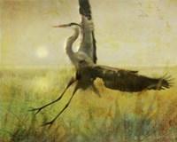 Foggy Heron II Fine Art Print