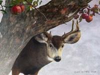 Apple Deer by Chris Vest - various sizes