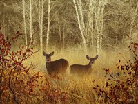Foggy Deer Fine Art Print