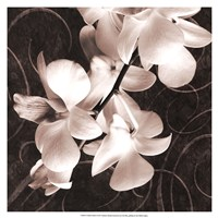 "19"" x 19"" Orchid Pictures"