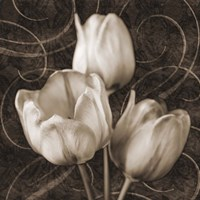 Tulip & Swirls II Fine Art Print
