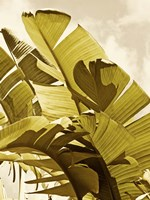 Palm Fronds I Fine Art Print