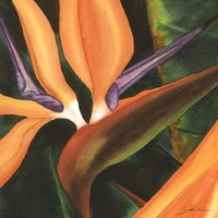 Bird Of Paradise Tile IV Fine Art Print
