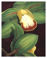 "Lime Orchid II by Jason Higby - 17"" x 21"""